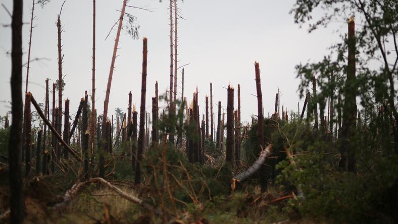 Krajobraz po burzy w Lotyniu