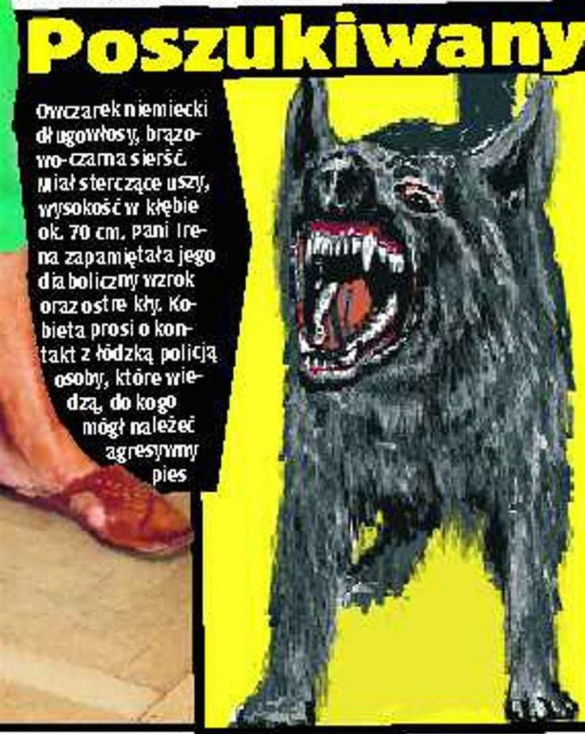 park, pies, pogryzienie, bestia, krew