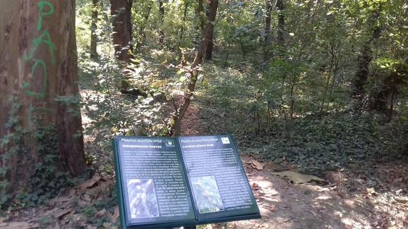 U Banjičkoj šumi nalazi se veliki broj retkih vrsta ptica, životinja i biljaka