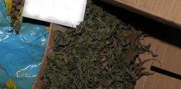 Policja zatrzymała samochody z marihuaną