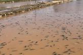 IMG-4dd603ef177d09927951947fdc9aeba2-V Slike posledica danasnjeg nevremena u mestu Zagubica. promo