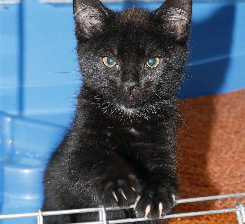 Czarny kot przyniesie Ci szczęście