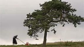 """""""Magiczne drzewo"""" nagrodzone na Festiwalu Galicja"""