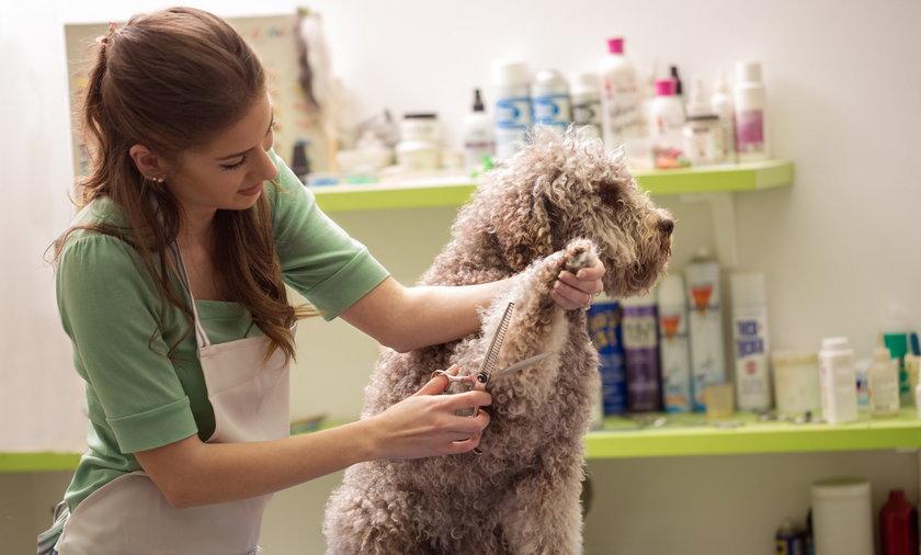 Zaoszczędź na groomerze. Tanie zestawy do pielęgnacji psiej sierści