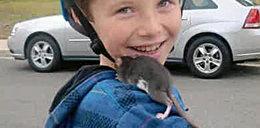 10-latek zmarł po ugryzieniu przez szczura