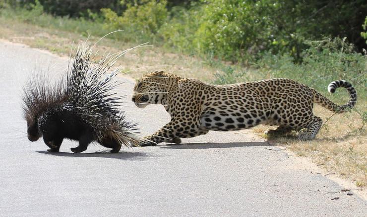580315_leopard-foto-profimedia-1