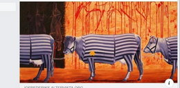 Kontrowersyjny wpis Fundacji Viva. Porównali krowy do więźniów obozu