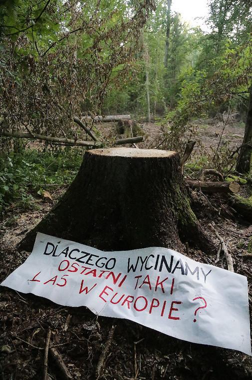 Puszcza Białowieska 3