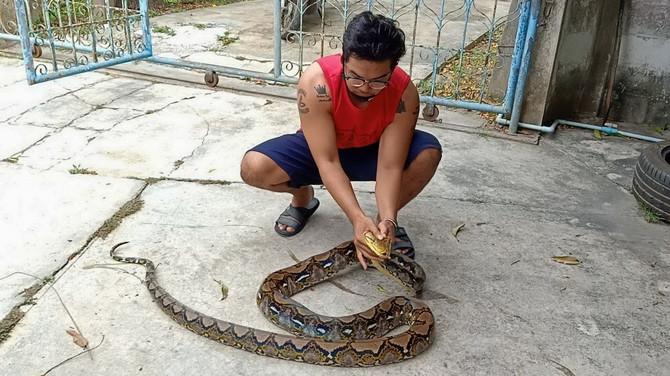 Ova zmija se krila u gumi