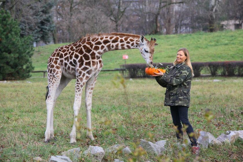 Żyrafek Gortat świetuje pierwsze urodziny!