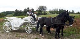 Dramat pod Nowym Sączem. Konie skradzione na rzeź?