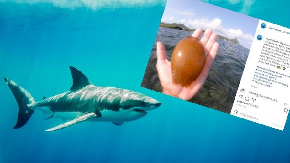 Jajo rekina to bardzo rzadkie znalezisko