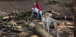 Krakowianka karmi dziecko piersią wśród trocin. To protest przeciwko wycince drzew