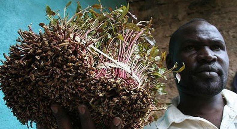 A Kenyan local khat farmer with his produce.