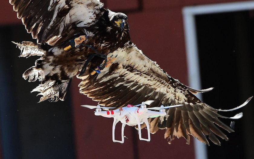 Policja zapewnia, że ptakom nie dzieje się krzywda, a podczas ćwiczeń na terenie zawsze znajduje się weterynarz