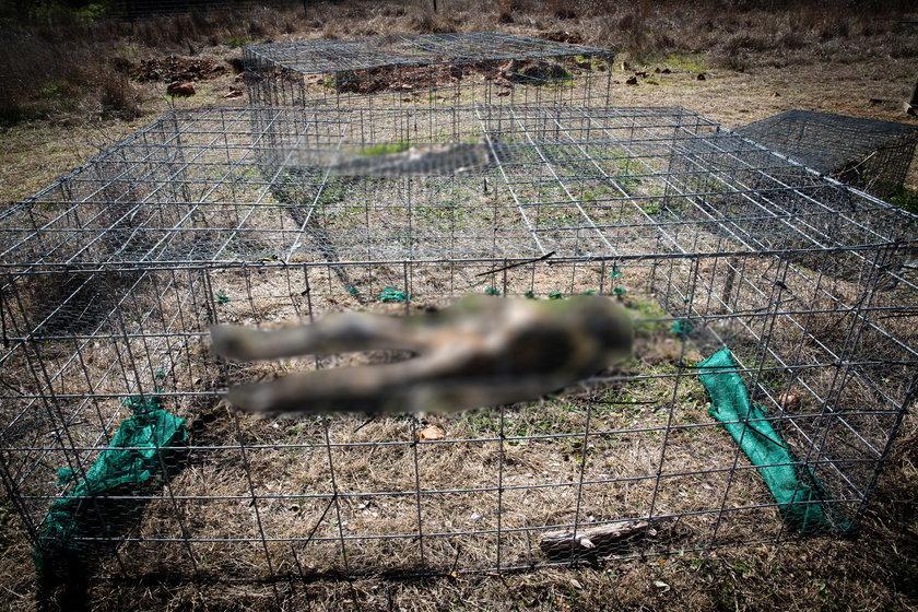 Trupia farma przy uniwersytecie  San Marcos Texas - The Forensic Anthropology Centre