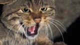 Policja odkryła zwłoki kobiety którą zjadły koty