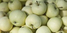 Zakażą importu owoców i warzyw z Polski?