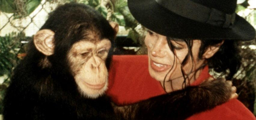 Co stało się z szympansem Michaela Jacksona? Tak potoczyły się jego losy [ZDJĘCIA]