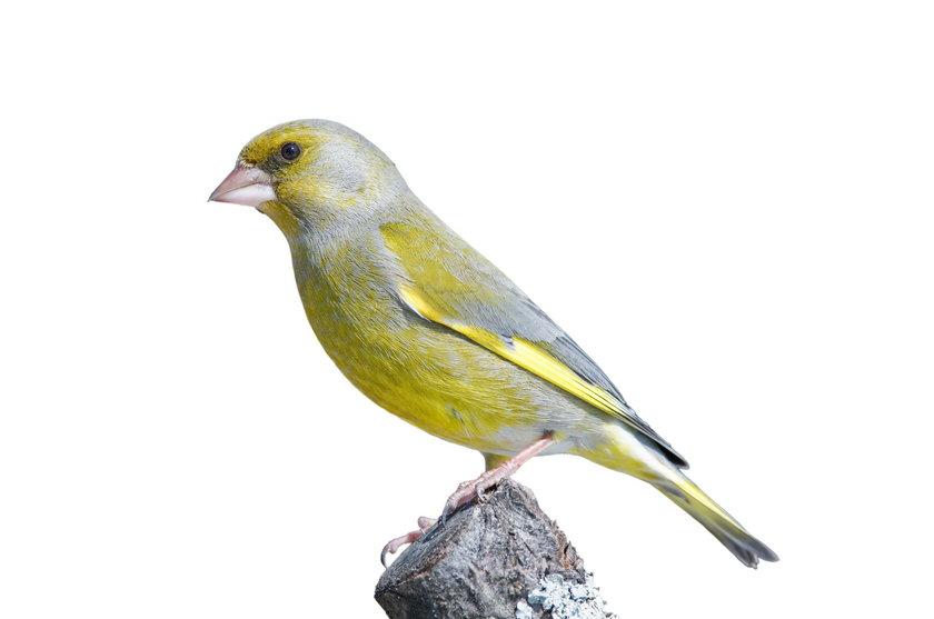 Sprawdź jak karmić ptaki