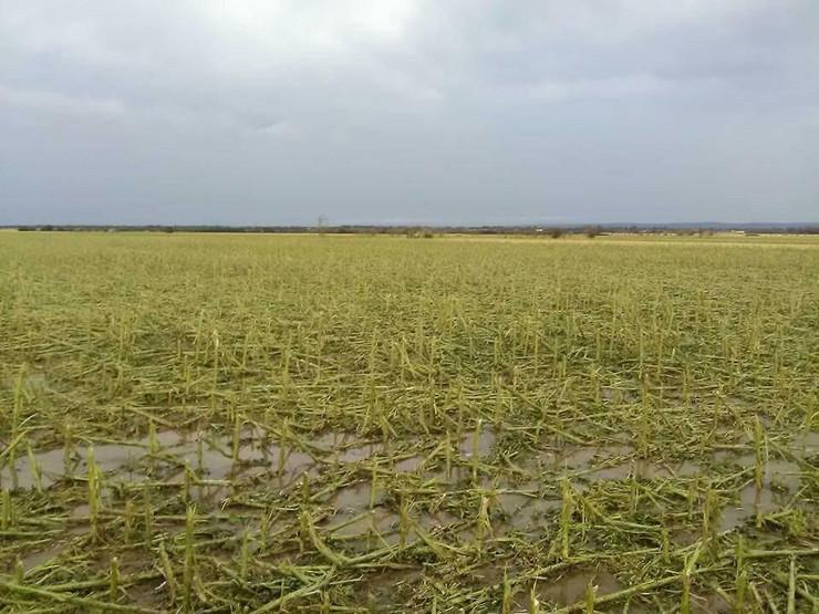 uništeni poljoprivredni usevi u zapadnoj srbiji