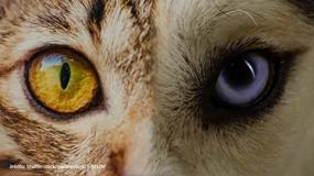 Jak widzą zwierzęta? Zobacz świat ich oczami