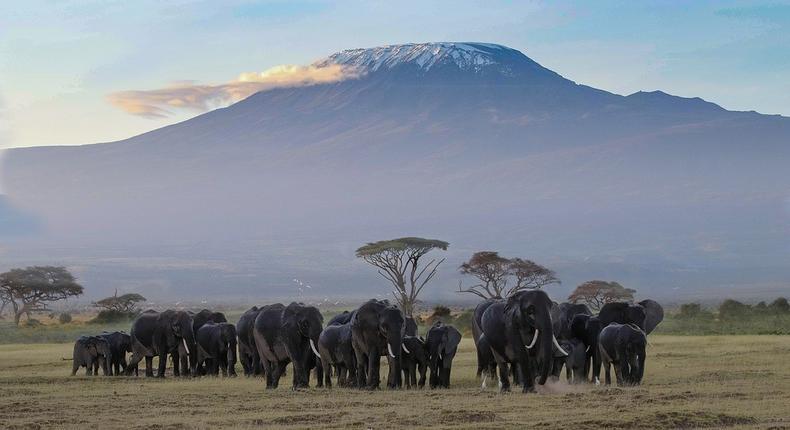 Image of a herd of elephants