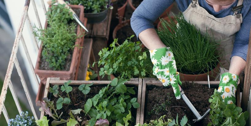 Własny ogródek na działce, balkonie, a nawet w kuchni. Jak to zrobić?