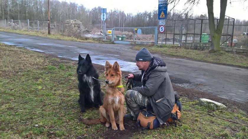 Wierny pies pół roku szukał drogi do domu