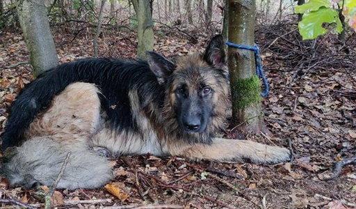 Jak tak można?! Pies żałośnie skomlał przywiązany do drzewa w środku lasu. Został skazany na pewną śmierć. Później zdarzył się cud