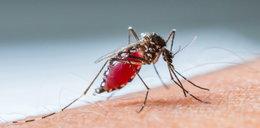 Ciebie też dręczą komary? Zobacz co na nie skutecznie działa