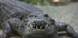 Krokodyl zjadł turystę na oczach rodziny!