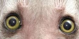 UWAGA. Nie patrz w te oczy! Możesz UMRZEĆ