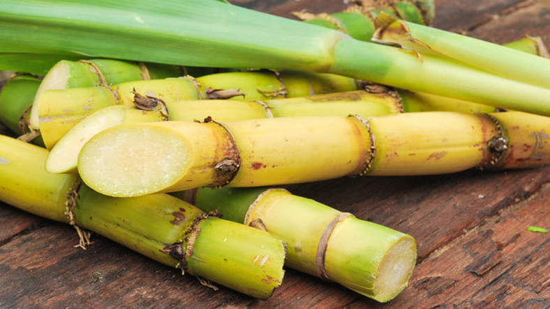 Sugar cane (Credit - Miele Ireland)