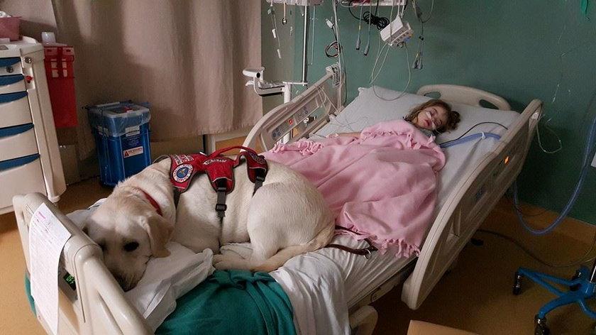 Pies nie rozstaje się z dziewczynką nawet w szpitalu