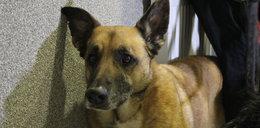 MPK zachęca do adopcji starszych psów