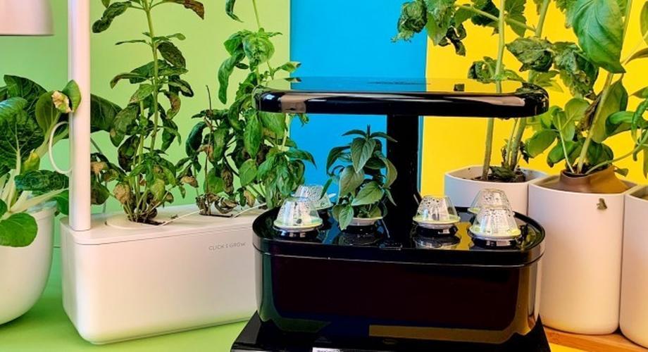 Vergleichstest: 4 smarte Indoor-Gärten ab 60 Euro