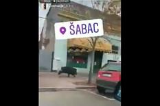 (VIDEO) DIVLJI VEPAR ŠOKIRAO ŠABAC Preplivao Savu i krenuo da juri ulicama, meštani BEŽALI U KAFIĆE I RESTORANE