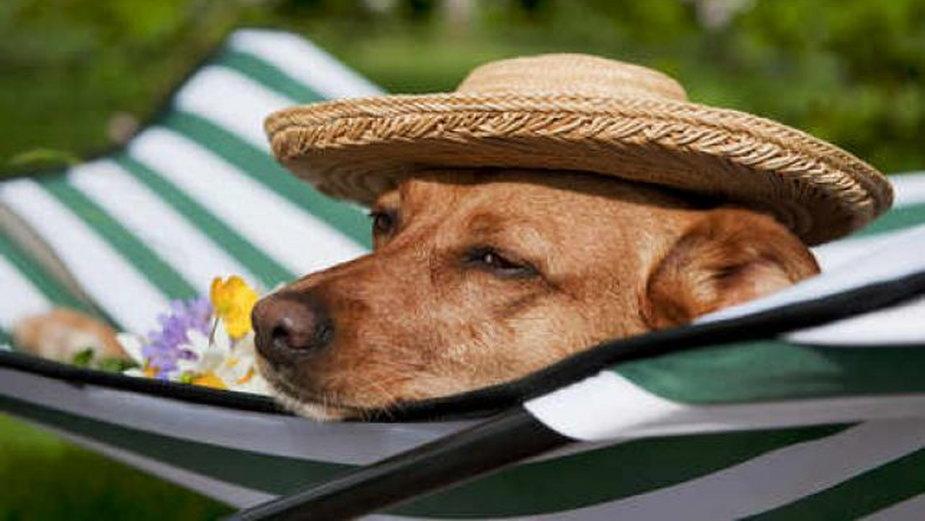 Przygotuj psa na letnie upały
