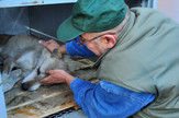 Beogradski zoološki vrt vukovi beo zoo vrt