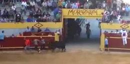Ofiara krwawej tradycji. Rozwścieczony byk zabił mężczyznę