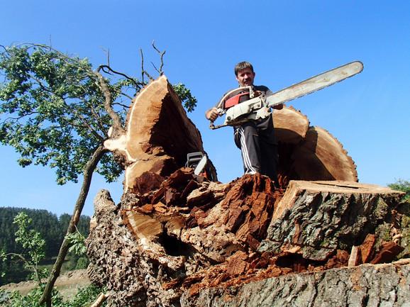 Kakve kletve, kakvi bakrači u 21. veku! Ako pošteno činiš, neće ti se vratiti loše, kaže Dragan Jovčić, koji je isekao sveto savinačko drvo
