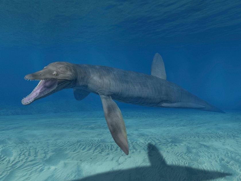 Odkrycie pod Radomiem. Znaleźli szczątki pliozaura