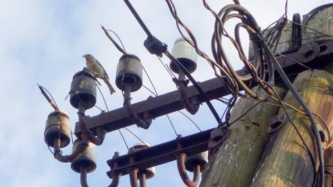 """Jak poinformował w poniedziałek URE, trafiły do niego wnioski dotyczące wysokości taryf na sprzedaż energii elektrycznej dla gospodarstw domowych w 2020 r. """"GW"""" prognozuje, że ceny wzrosnąć mogą o 10-20 proc."""