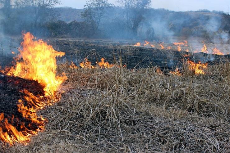 Požar, njive, Pomoravlje, foto Tanjug, D. Aničić