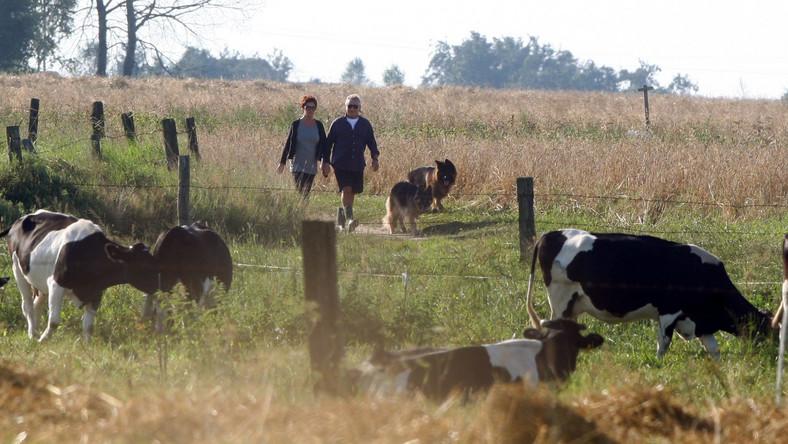 Któż to nadciąga wiejską drogą? Niemałe zaskoczenie mogli przeżyć gospodarze zabierający się do dojenia krów, gdyby przyjrzeli się tej parze