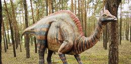 Takie dinozaury staną w Poznaniu!