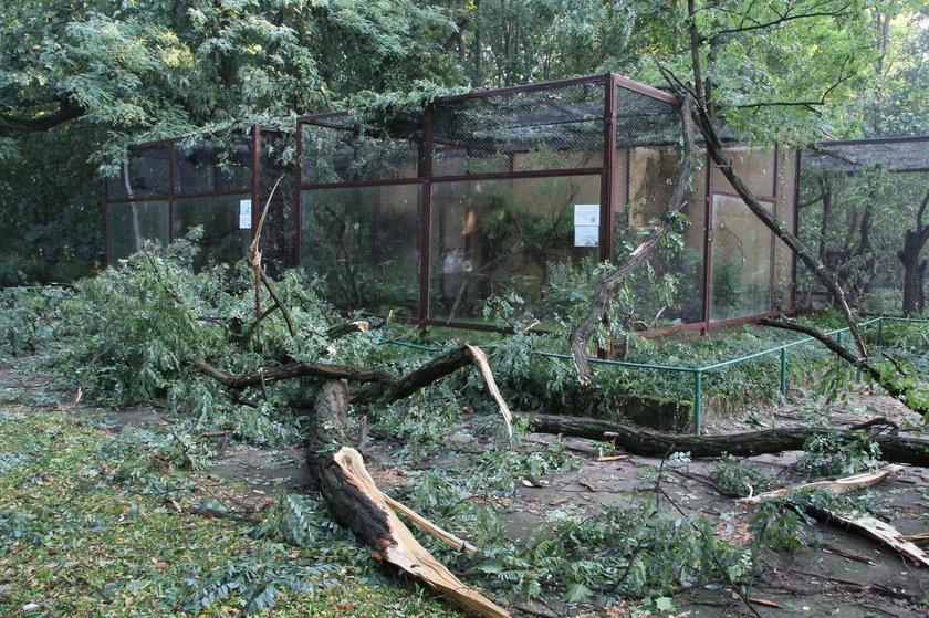 Usuwanie szkód po nawałnicy w Nowym Zoo w Poznaniu