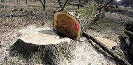 Obłuda polityka PO. Wyciął drzewa, a teraz zwalcza Szyszkę!