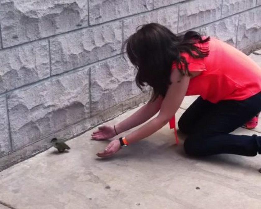 Ryzykowała życie, żeby uratować kaczuszki